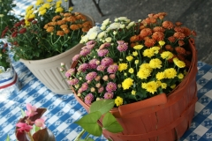 Country store mums